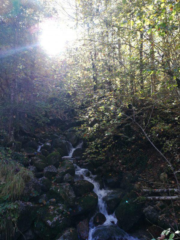 Jagahusl-Bodinggraben-Nationalpark-Apotheke-Molln--Wanderlust-ohne-Frust-in-den-Bergen-5_800x800-equal